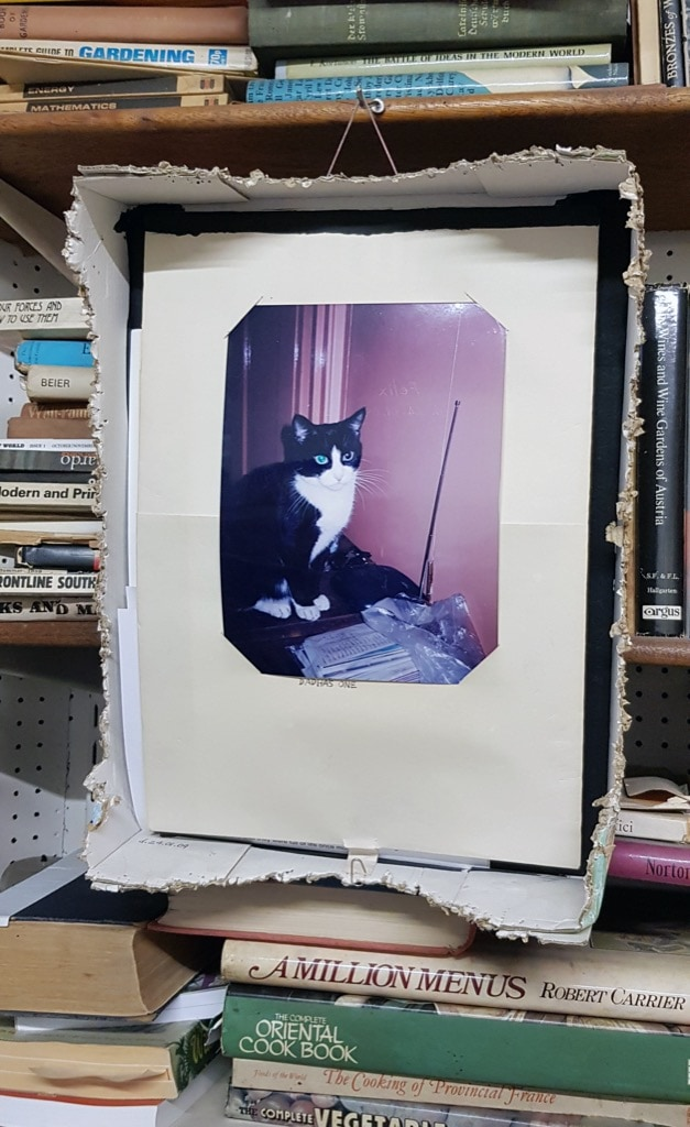 Patrick Barrington, photo, cat